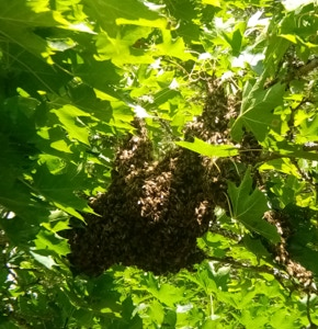 A swarm of bees is spectaculair.